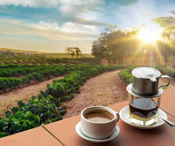 Country Coffee Profile: Vietnam